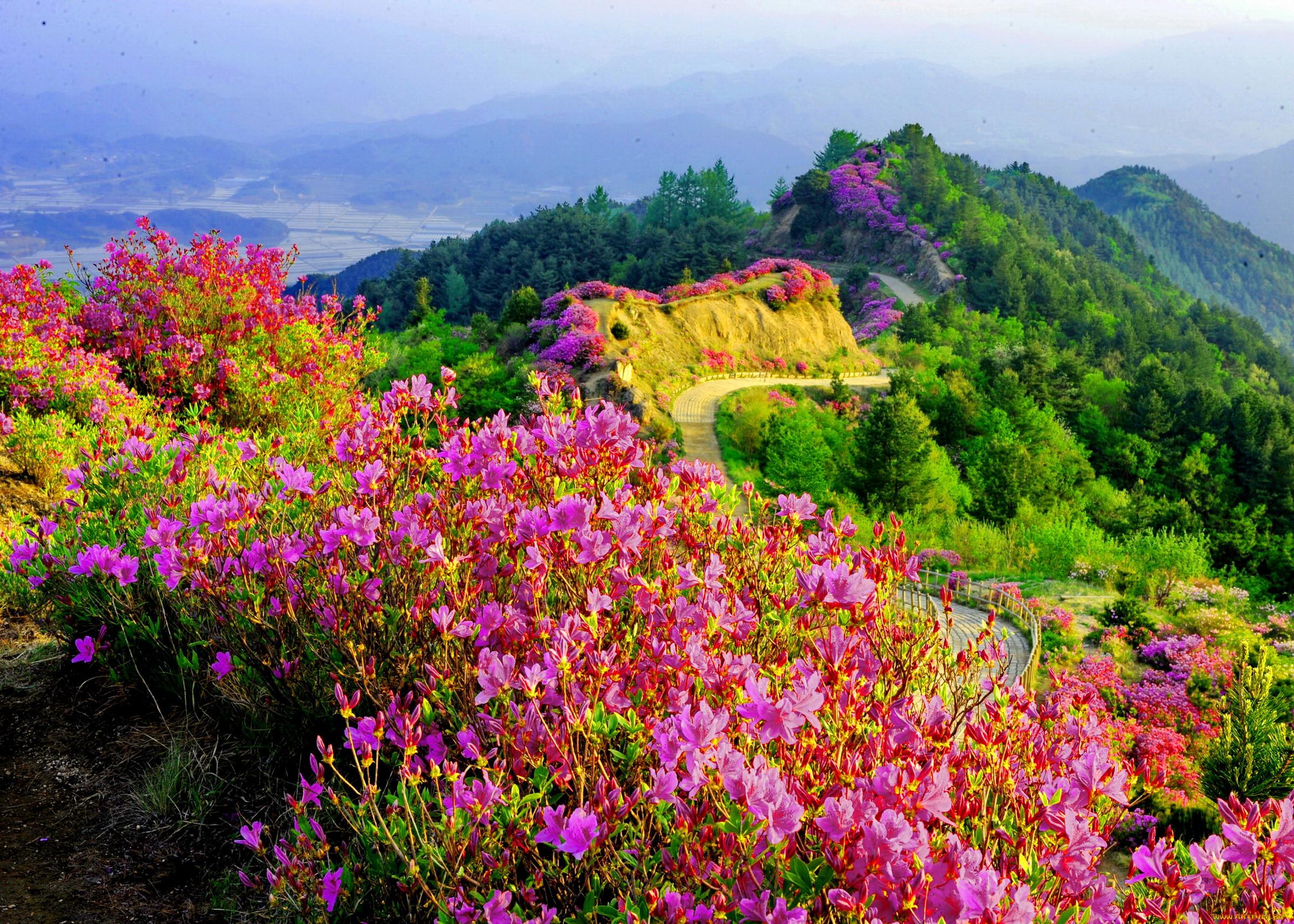 уникальная возможность цветущие горы фото практически каждый его